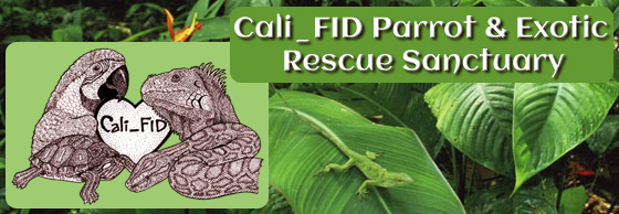 Cali_FID Parrot & Exotic Rescue