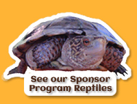 Our Sponsor Reptiles